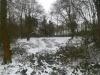 Firetop in snow